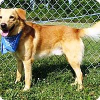 Adopt A Pet :: Rio - Oswego, IL