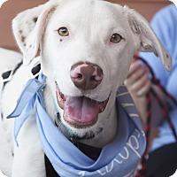 Adopt A Pet :: Van Bellamy - Knoxville, TN