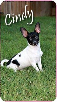 Chihuahua Mix Dog for adoption in Odessa, Texas - Cindy