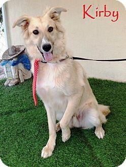 Retriever (Unknown Type)/Collie Mix Dog for adoption in San Diego, California - Kirby
