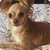 Adopt A Pet :: Tippy - Vacaville, CA