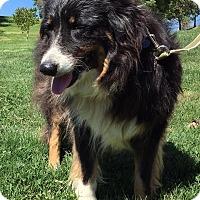 Adopt A Pet :: May - Phelan, CA