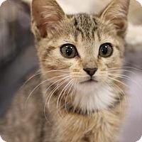 Adopt A Pet :: Gisell - Sacramento, CA