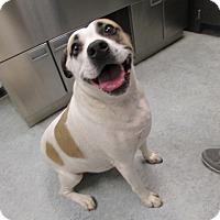 Adopt A Pet :: Molly - Warrenton, NC