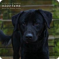 Shepherd (Unknown Type) Mix Dog for adoption in Edwardsville, Illinois - ceaser