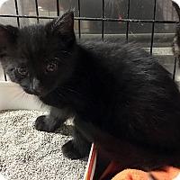 Adopt A Pet :: Wesley - Loogootee, IN