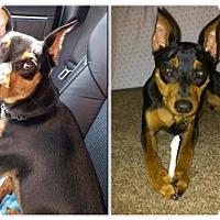 Adopt A Pet :: Bo - Tampa, FL