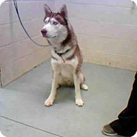 Adopt A Pet :: DIELIE - Conroe, TX
