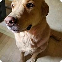 Adopt A Pet :: Marley - Fort Wayne, IN