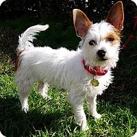 Adopt A Pet :: Jacob - Los Angeles, CA