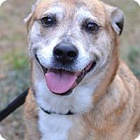 Adopt A Pet :: Rajah - Enfield, CT