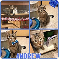Adopt A Pet :: Andrew - Arlington/Ft Worth, TX