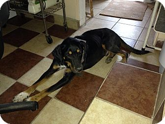 Pointer Mix Dog for adoption in San Diego, California - Vo
