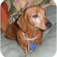 Adopt A Pet :: Naomi - San Jose, CA