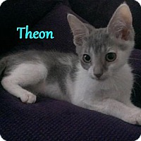 Adopt A Pet :: Theon - Chandler, AZ