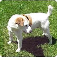 Adopt A Pet :: SUSIE - Scottsdale, AZ