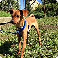 Adopt A Pet :: Colt - Springvale, ME