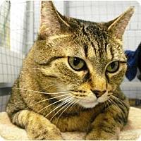 Adopt A Pet :: Cognac - Mission, BC