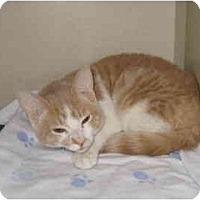 Adopt A Pet :: Mickey - Mesa, AZ