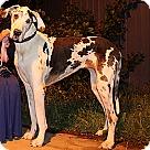 Adopt A Pet :: Movado