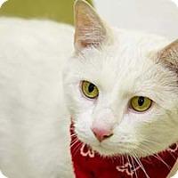 Adopt A Pet :: Powder - Merrifield, VA