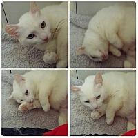 Adopt A Pet :: Emma - Monrovia, CA