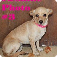 Adopt A Pet :: JASMINE - Humble, TX