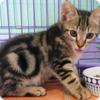 Adopt A Pet :: MAKA - Makawao, HI