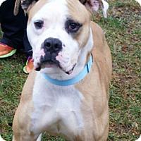 Adopt A Pet :: Danny - Framingham, MA