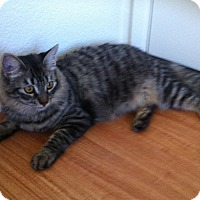 Adopt A Pet :: Giselle - Mission Viejo, CA