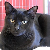 Adopt A Pet :: Terrence - Winchendon, MA