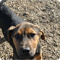 Adopt A Pet :: West Meet me 3/18 - Manchester, CT