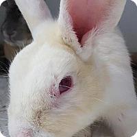 Adopt A Pet :: Donald - Williston, FL