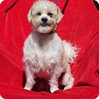 Adopt A Pet :: Gipper - Oakland, AR