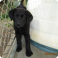 Adopt A Pet :: Yasmin - Lincolndale, NY