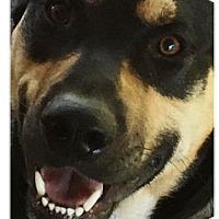 Adopt A Pet :: GNASH - DeLand, FL