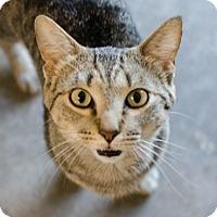 Adopt A Pet :: Hoot - Greenwood, SC