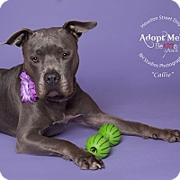 Adopt A Pet :: Callie - Houston, TX
