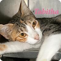 Adopt A Pet :: Tabitha - El Cajon, CA