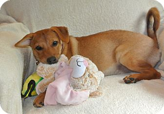 Terrier (Unknown Type, Medium) Mix Puppy for adoption in Surrey, British Columbia - Karen