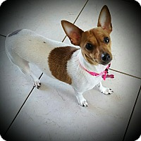 Adopt A Pet :: Bailey - West Palm Beach, FL