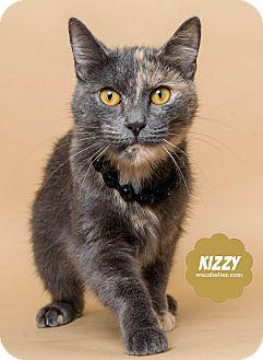 Calico Cat for adoption in Wyandotte, Michigan - Kizzy