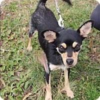 Adopt A Pet :: Belle - Fort St. John, BC