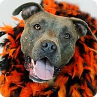 Adopt A Pet :: Fiona - Santa Maria, CA