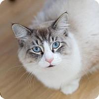 Adopt A Pet :: Prince - Acme, MI