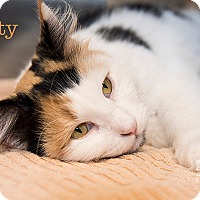 Adopt A Pet :: Patty - San Juan Capistrano, CA