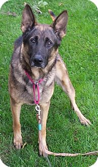 German Shepherd Dog Dog for adoption in Columbus, Ohio - Max