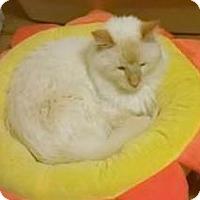 Adopt A Pet :: Tofu - Encinitas, CA