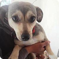 Adopt A Pet :: Marilu - San Diego, CA
