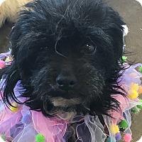 Adopt A Pet :: Mindy - Oklahoma City, OK